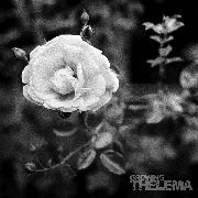 THELEMA (AUSTRIA) - GROWING